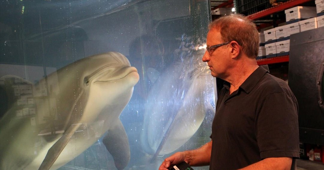 rompotiko-delfini-zoologikous-kipous.jpg